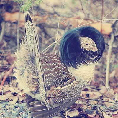 Blog7 - bird
