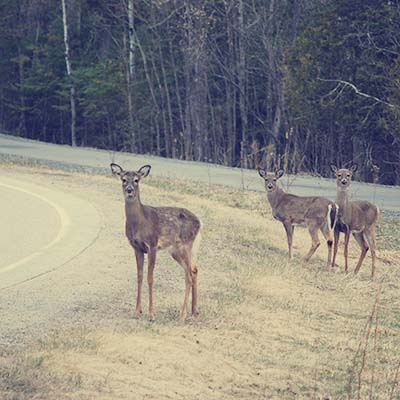Blog7 - Deer