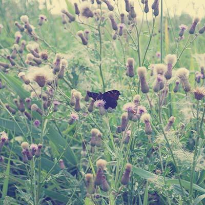 Twiske - wildlife