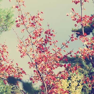 Sept 27 - Fall