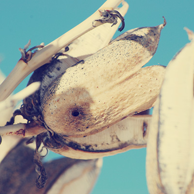 De voet - yucca