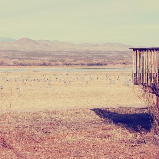 Parks a t Globe - Bosque del Apache