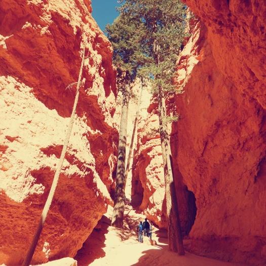 Parks a t Globe - Bryce Canyon