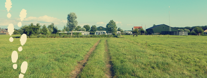 Tractor trail through a grassy field leading towards a campground