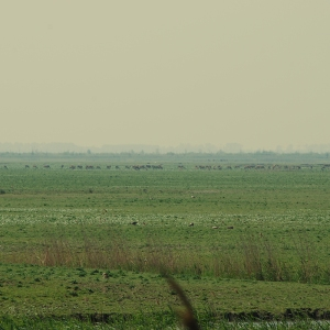 De wolf - kaal landschap