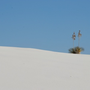 White sands - view