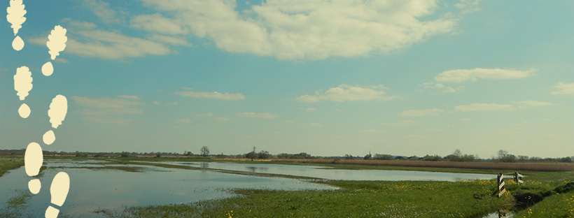 wide view of a dutch landscape with clouds in the sky and water on the field