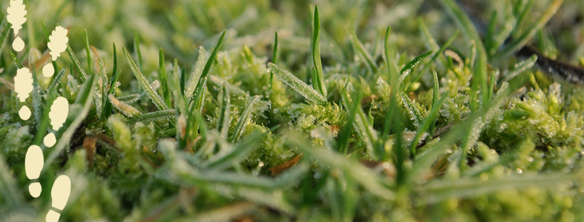 frozen grass and moss