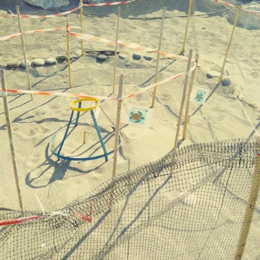 beach tourist_turtle eggs