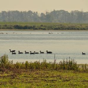 Biesbosch - birding