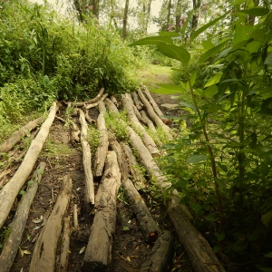 Biesbosch - trail