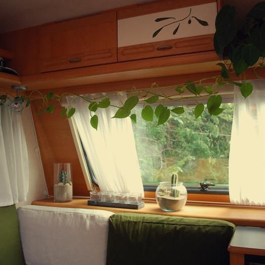 Tiny house 3 - plants